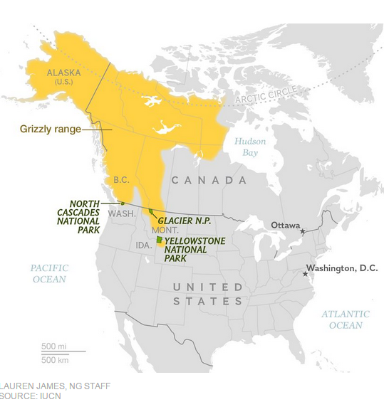 Grizzly territory, National Geographic