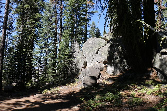 Taft Point - the trail is full of trees and rocky outcroppings until you reach The Fissures