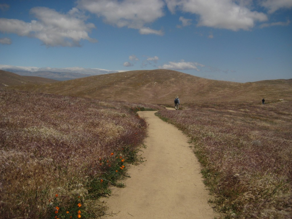 Antelope Valley California Poppy Reserve: Need Sun Protection Here!